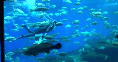 Palma Aquarium | Ticket & Tours Price Comparison