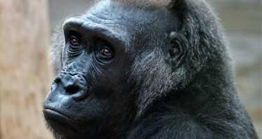 Zoo Prag | Online Tickets & Touren Preisvergleich