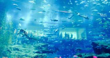 Lost Chambers Aquarium | Ticket & Tours Price Comparison