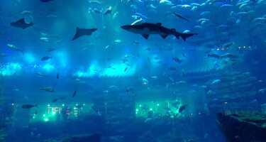Dubai Aquarium & Underwater Zoo | Ticket & Tours Price Comparison