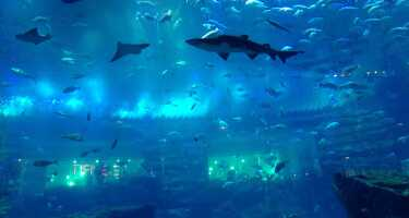 Dubai Aquarium & Underwater Zoo | Online Tickets & Touren Preisvergleich